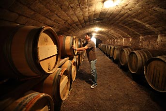 the clay and limestone wines are left to mature in barrels